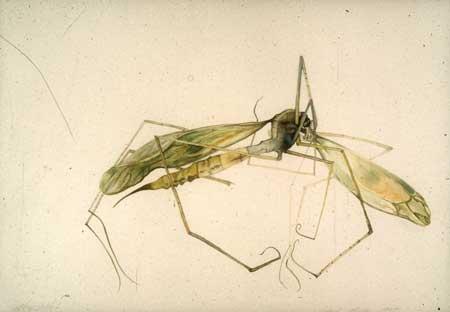 deadbug2
